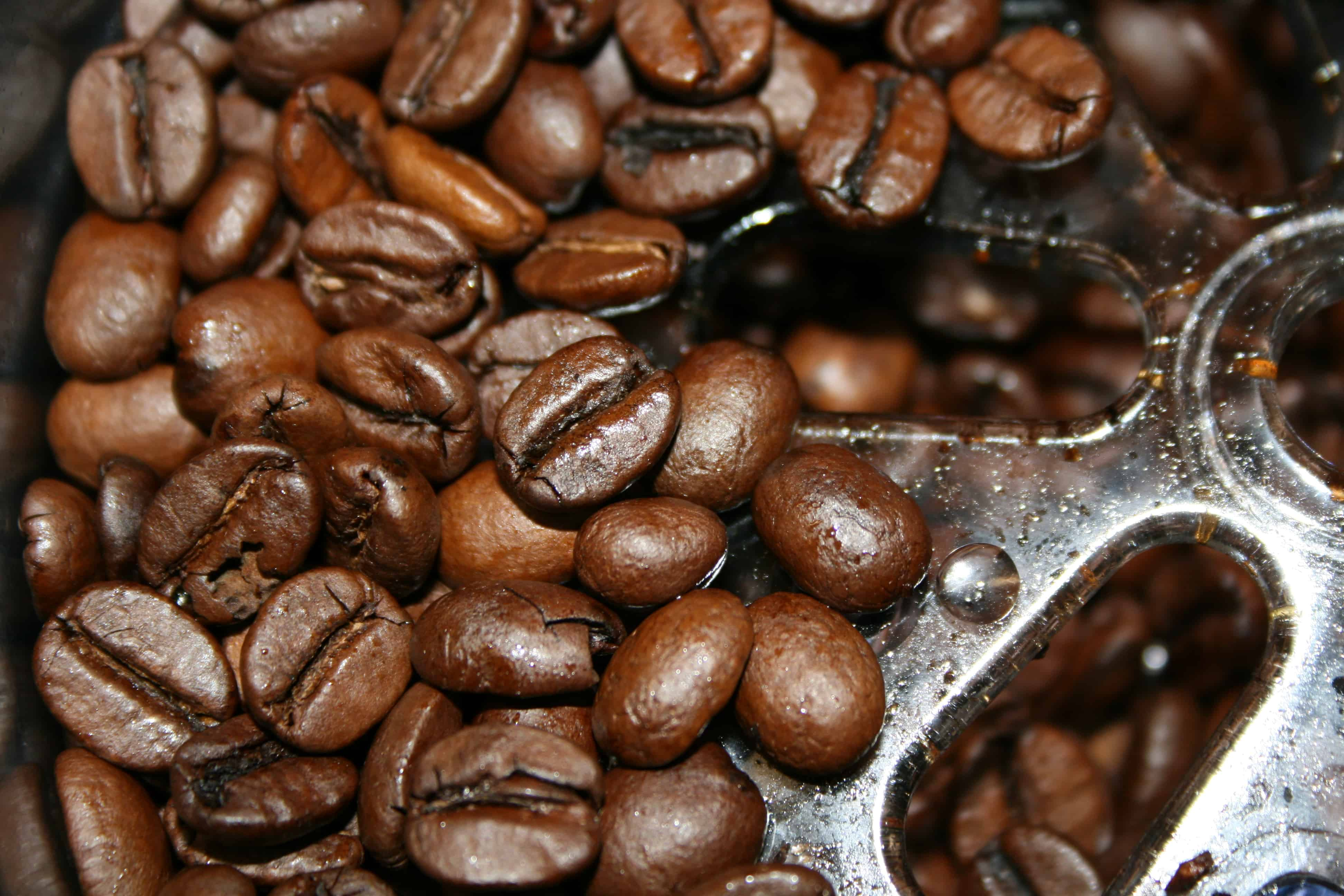 בייסיק של אסקסו- חווית קפה במחיר משתלם במיוחד