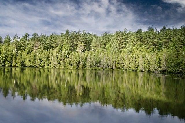 """יח""""צ או חזון משותף? גוגל פועלת נגד כריתת היערות בעולם"""